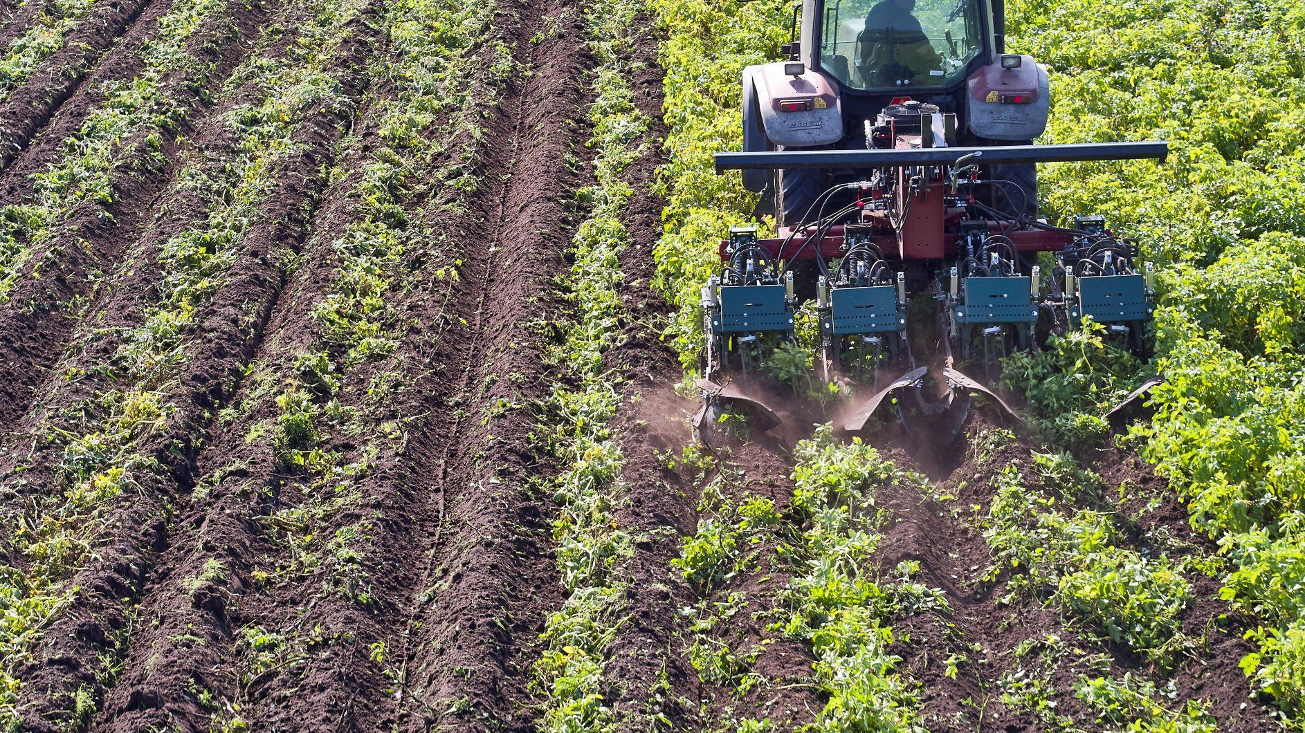 Effektivt mekanisk vækststop i kartofler med Crown Crusher